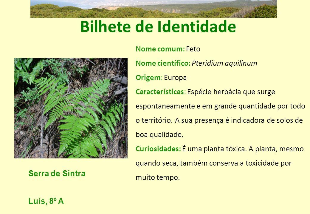 Bilhete de Identidade Nome comum: Feto Nome científico: Pteridium aquilinum Origem: Europa Características: Espécie herbácia que surge espontaneamente