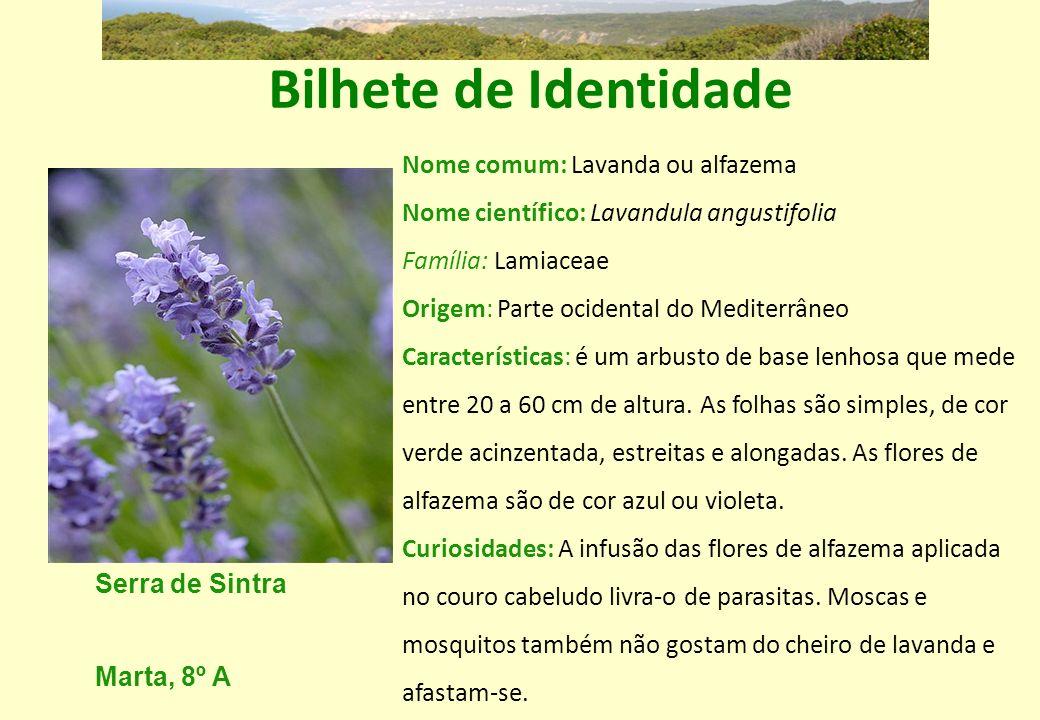 Bilhete de Identidade Nome comum: Lavanda ou alfazema Nome científico: Lavandula angustifolia Família: Lamiaceae Origem: Parte ocidental do Mediterrân