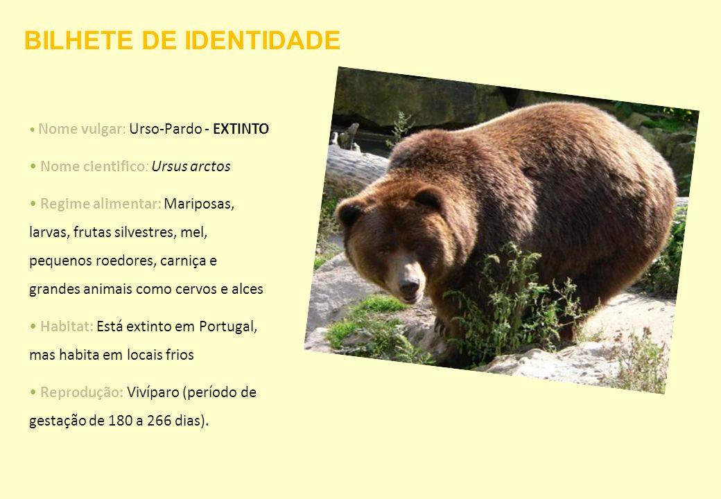 Nome vulgar: Urso-Pardo - EXTINTO Nome cientifico: Ursus arctos Regime alimentar: Mariposas, larvas, frutas silvestres, mel, pequenos roedores, carniç