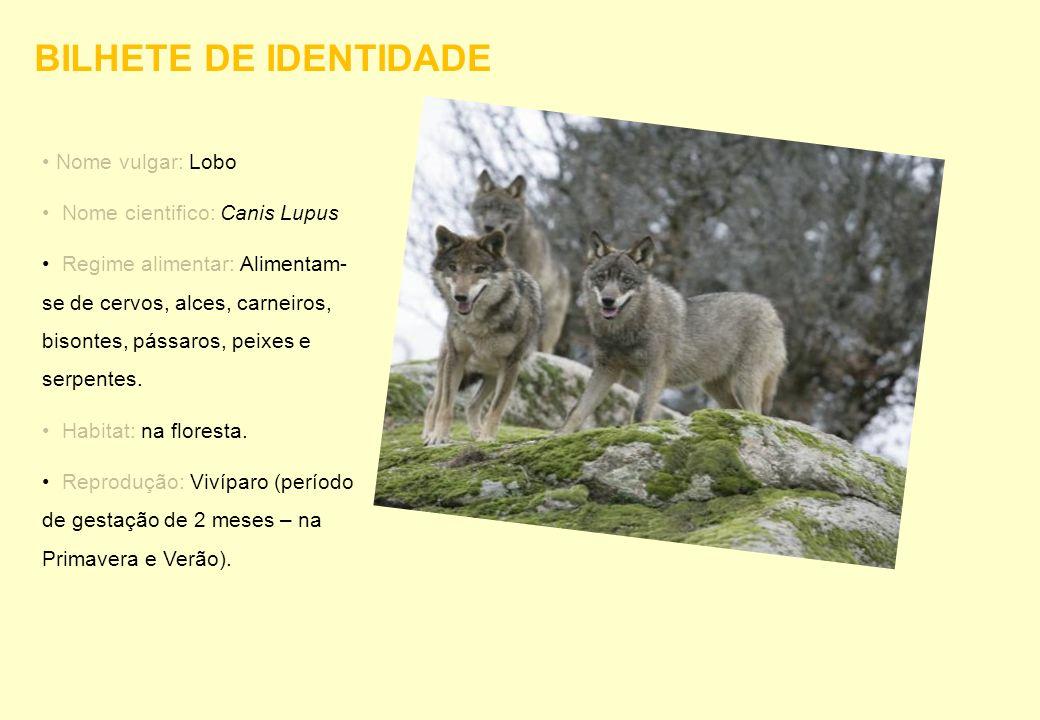 Nome vulgar: Lobo Nome cientifico: Canis Lupus Regime alimentar: Alimentam- se de cervos, alces, carneiros, bisontes, pássaros, peixes e serpentes. Ha