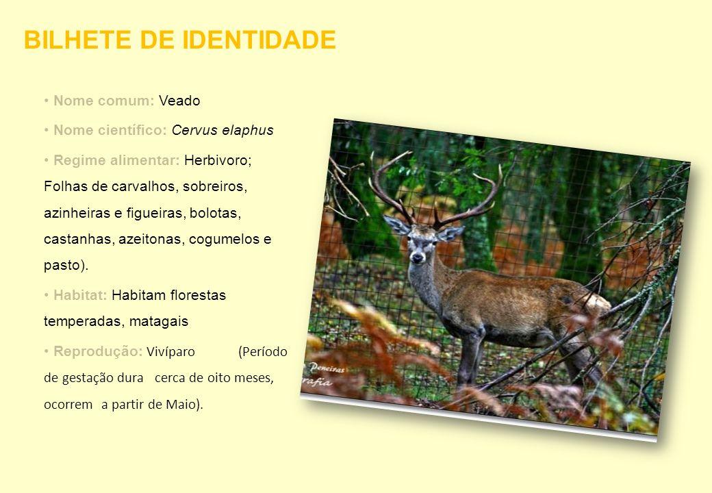 Nome comum: Veado Nome científico: Cervus elaphus Regime alimentar: Herbivoro; Folhas de carvalhos, sobreiros, azinheiras e figueiras, bolotas, castan