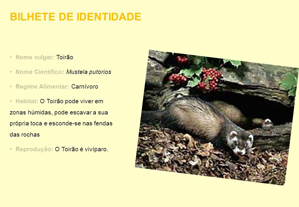 Nome vulgar: Toirão Nome Cientifico: Mustela putorios Regime Alimentar: Carnívoro Habitat: O Toirão pode viver em zonas húmidas, pode escavar a sua pr