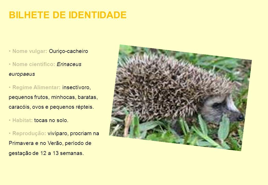 Nome vulgar: Ouriço-cacheiro Nome científico: Erinaceus europaeus Regime Alimentar: insectívoro, pequenos frutos, minhocas, baratas, caracóis, ovos e