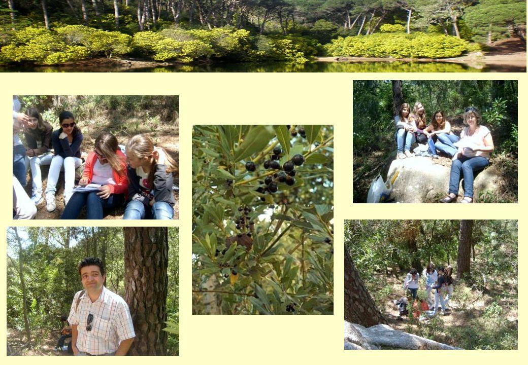 Bilhete de Identidade Nome comum: Carvalho Nome científico: Quercus roble Família: Fagáceas Origem: Europa Características: atinge 30 a 40 metros de altura.