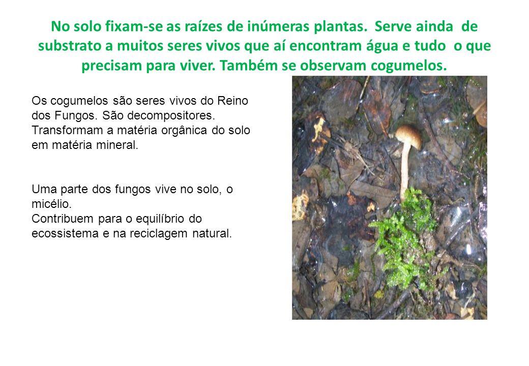 No solo fixam-se as raízes de inúmeras plantas. Serve ainda de substrato a muitos seres vivos que aí encontram água e tudo o que precisam para viver.