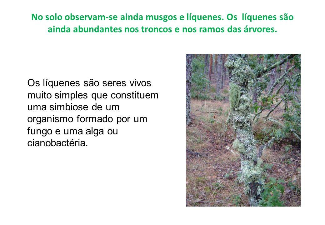 No solo observam-se ainda musgos e líquenes. Os líquenes são ainda abundantes nos troncos e nos ramos das árvores. Os líquenes são seres vivos muito s