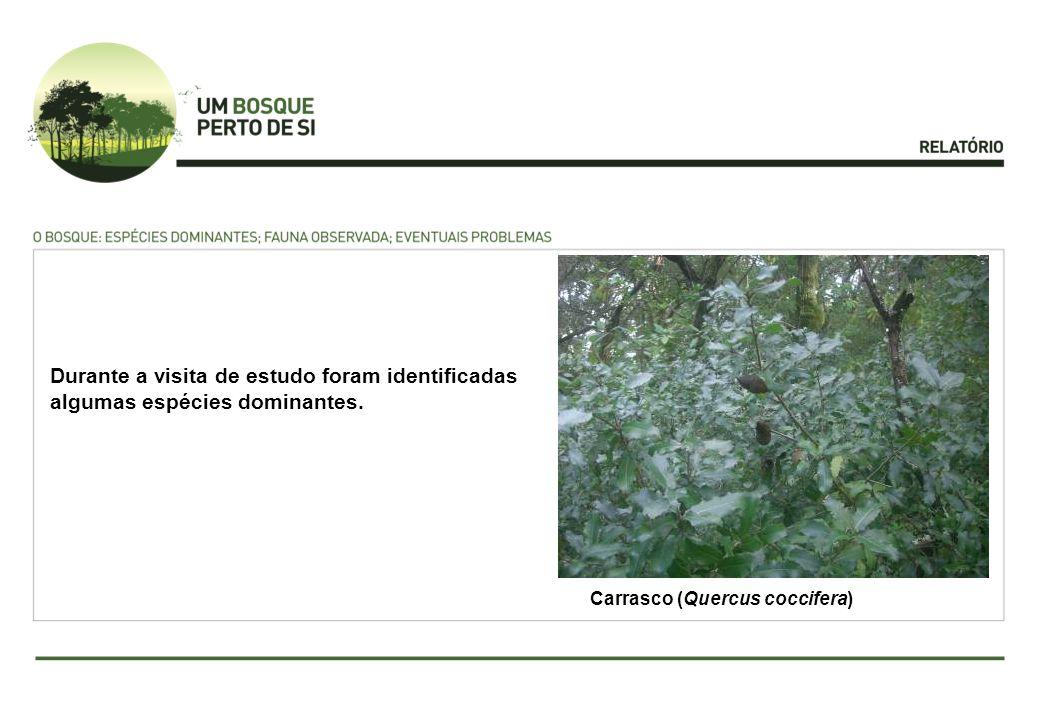 Carrasco (Quercus coccifera) Durante a visita de estudo foram identificadas algumas espécies dominantes.