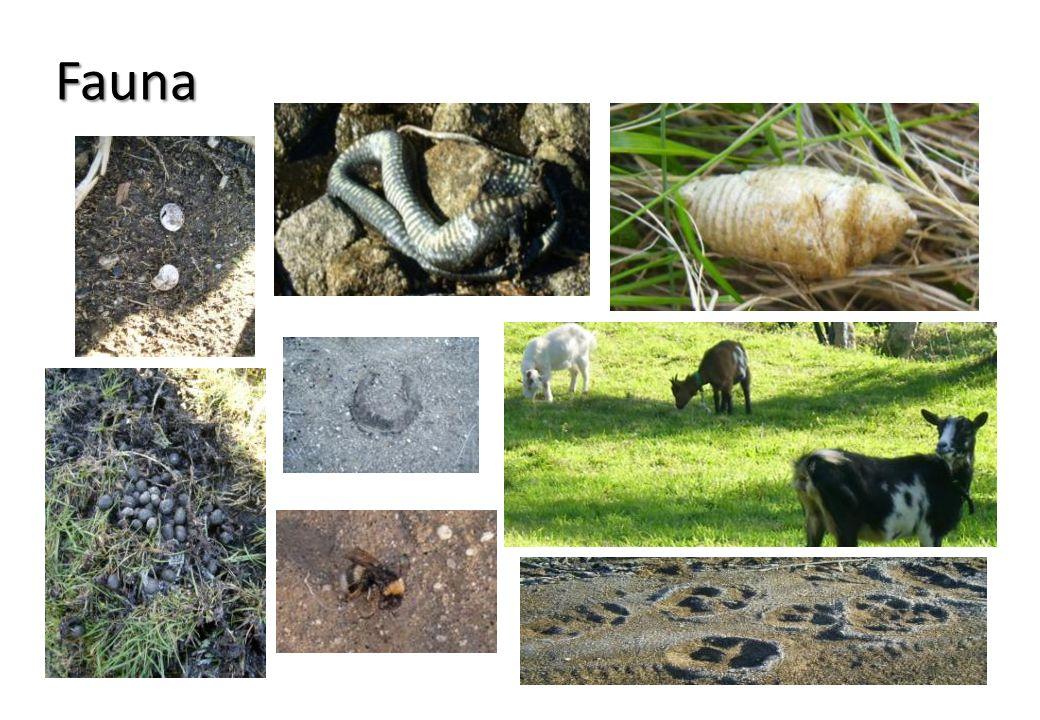 O projecto foi-nos apresentado pela professora de Biologia, Marilena Seixas.