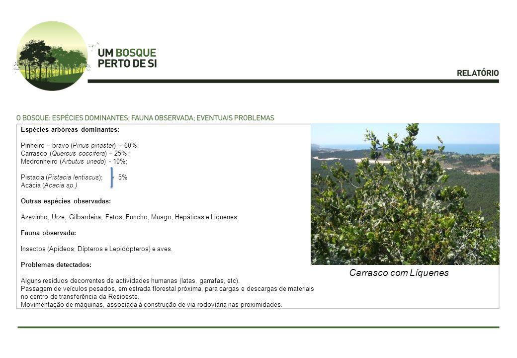 Espécies arbóreas dominantes: Pinheiro – bravo (Pinus pinaster) – 60%; Carrasco (Quercus coccifera) – 25%; Medronheiro (Arbutus unedo) - 10%; Pistacia (Pistacia lentiscus); 5% Acácia (Acacia sp.) Outras espécies observadas: Azevinho, Urze, Gilbardeira, Fetos, Funcho, Musgo, Hepáticas e Liquenes.