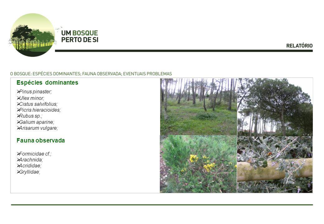 Espécies dominantes Pinus pinaster; Ulex minor; Cistus salvifolius; Picris hieracioides; Rubus sp.; Galium aparine; Arisarum vulgare; Fauna observada