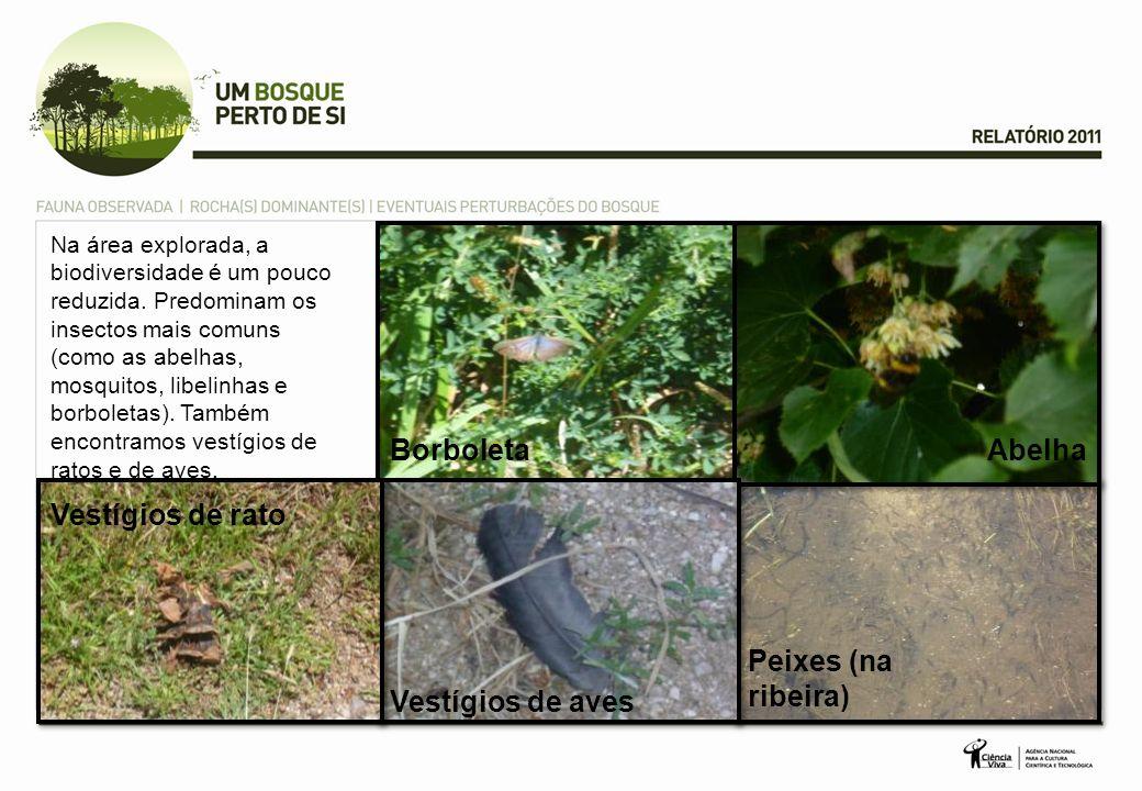 Borboleta Peixes (na ribeira) Abelha Na área explorada, a biodiversidade é um pouco reduzida. Predominam os insectos mais comuns (como as abelhas, mos