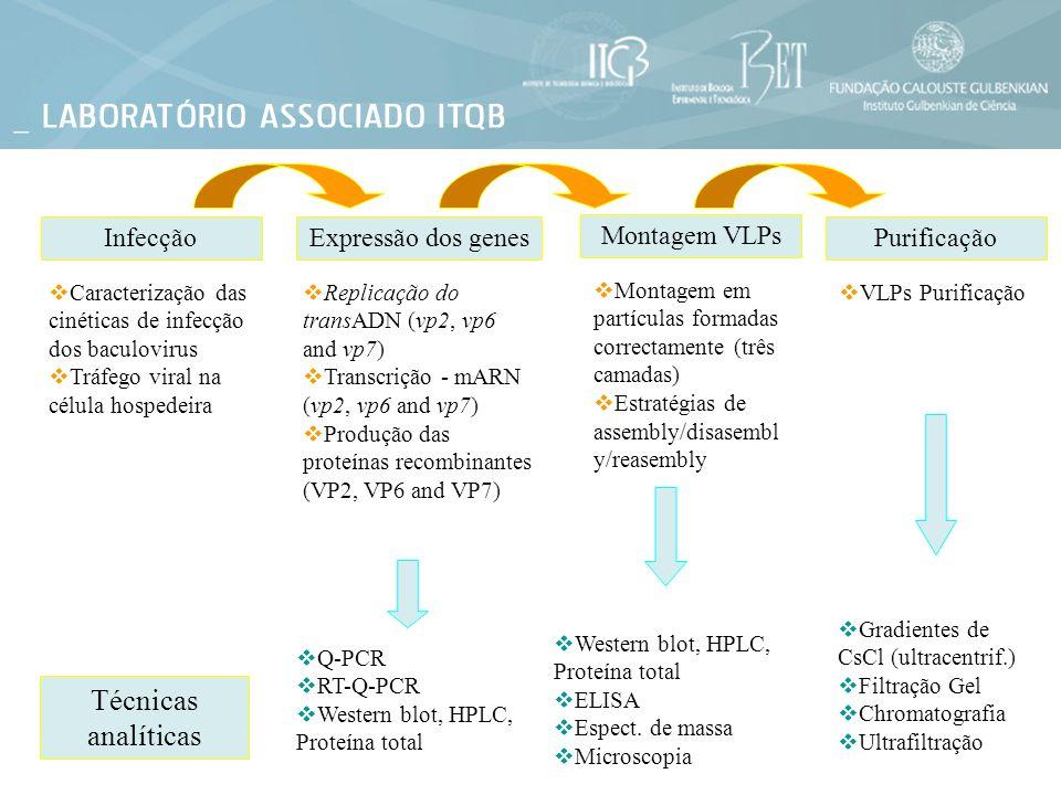 Infecção Caracterização das cinéticas de infecção dos baculovirus Tráfego viral na célula hospedeira Purificação VLPs Purificação Montagem VLPs Montag