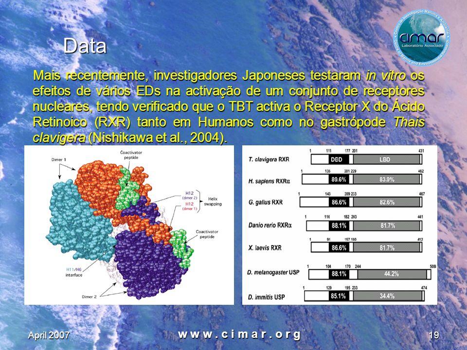 April 2007 w w w. c i m a r. o r g 19 Data Mais recentemente, investigadores Japoneses testaram in vitro os efeitos de vários EDs na activação de um c
