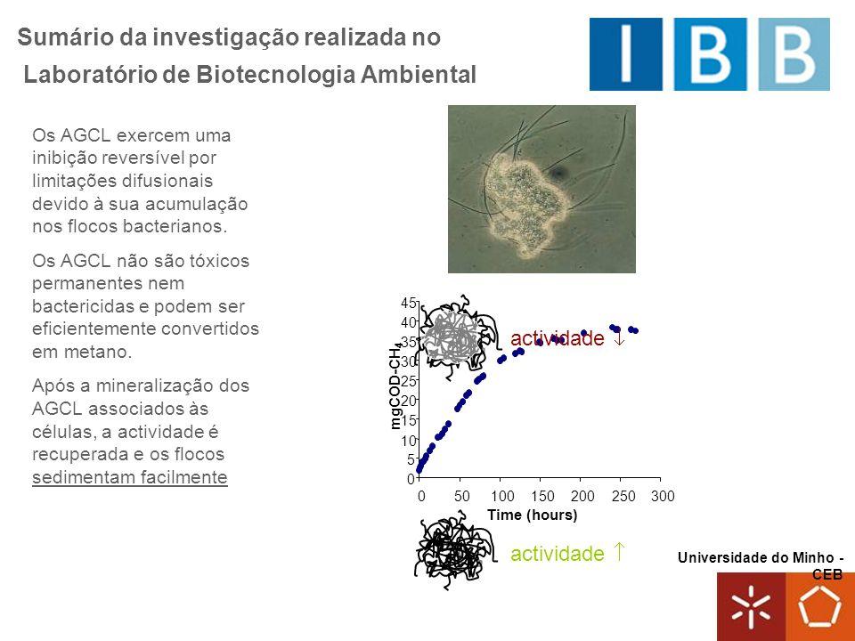 Universidade do Minho - CEB Sumário da investigação realizada no Laboratório de Biotecnologia Ambiental Os AGCL exercem uma inibição reversível por limitações difusionais devido à sua acumulação nos flocos bacterianos.