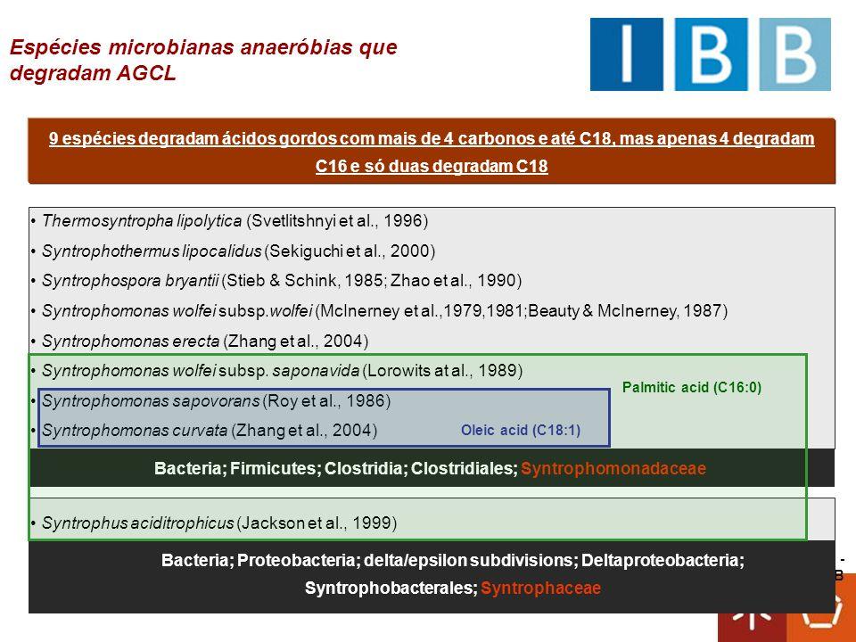 Universidade do Minho - CEB Isolada de uma cultura enriquecida em oleato de sódio Degrada ácidos gordos entre C 4 e C 18 Degrada ácidos gordos insaturados tal como oleato (C 18:1 ) O seu genoma vai ser sequenciado pelo Joint Genome Institute (US department of Energy) É afiliada com syntrophomonas Syntrophomonas zehnderi sp.