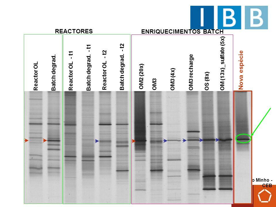 Universidade do Minho - CEB Microrganismos filogeneticamente relacionados com Syntrophomonas zehnderi deverão ter um papel importante no processo de degradação de AGCL.
