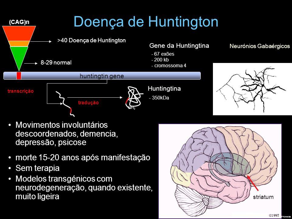 Doença de Huntington transcrição Huntingtina - 350kDa tradução NH 2 >40 Doença de Huntington (CAG)n huntingtin gene 8-29 normal - 67 exões - 200 kb -