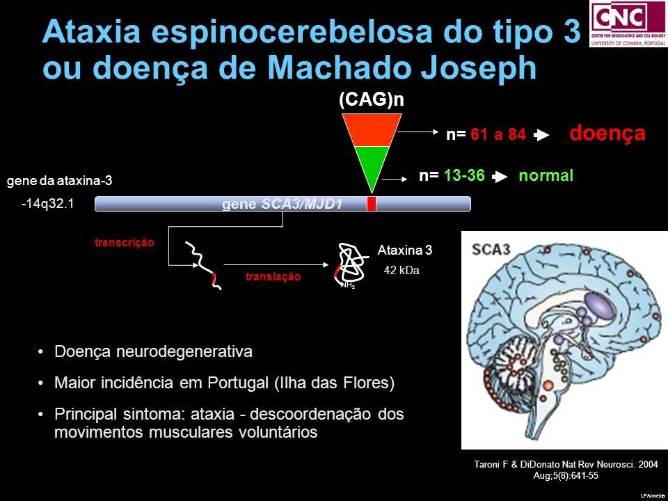 AGCAGCAGCGGGACCTATC shAtax mut T T C A A A G A G TCGTCGTCGCCCTGGATAG AGCAGCAGGGGGACCTATC shAtax wt T T C A A A G A G TCGTCGTCCCCCTGGATAG Nova estratégia para o tratamento da doença de Machado-Joseph silenciamento da expressão da ataxina-3 mutante com vectores lentivirais Ataxina mutante + sequencias controlo Ataxina mutante + sequências para silenciamento ataxina-3 mutante