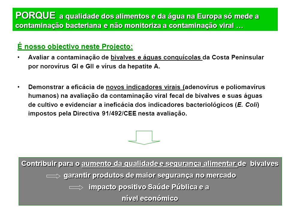 É nosso objectivo neste Projecto: Avaliar a contaminação de bivalves e águas conquícolas da Costa Peninsular por norovírus GI e GII e vírus da hepatit