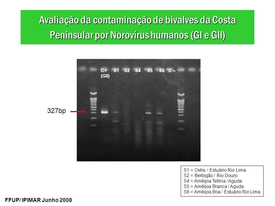 327bp C+ S1 S2 S4 S5 S6 C – (GII) Avaliação da contaminação de bivalves da Costa Peninsular por Norovírus humanos (GI e GII) FFUP/ IPIMAR Junho 2008 S