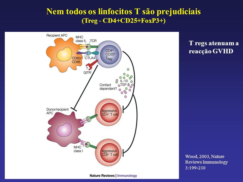 T regs atenuam a reacção GVHD Nem todos os linfocitos T são prejudiciais (Treg - CD4+CD25+FoxP3+) Wood, 2003, Nature Reviews Immunology 3:199-210