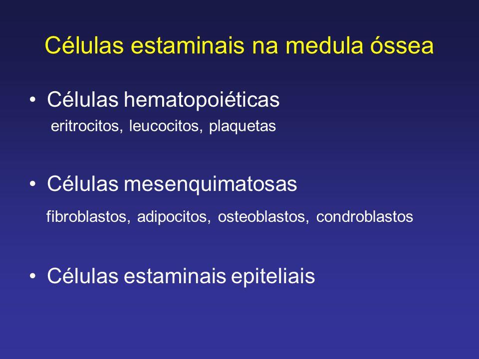 Células estaminais na medula óssea Células hematopoiéticas eritrocitos, leucocitos, plaquetas Células mesenquimatosas fibroblastos, adipocitos, osteob