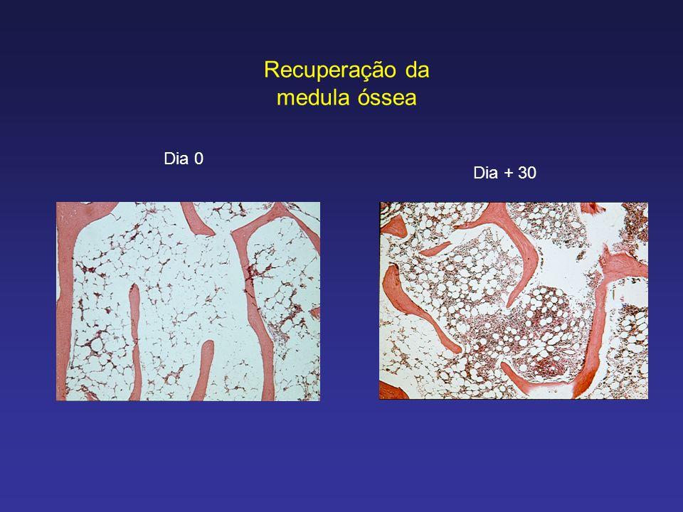 Recuperação da medula óssea Dia 0 Dia + 30