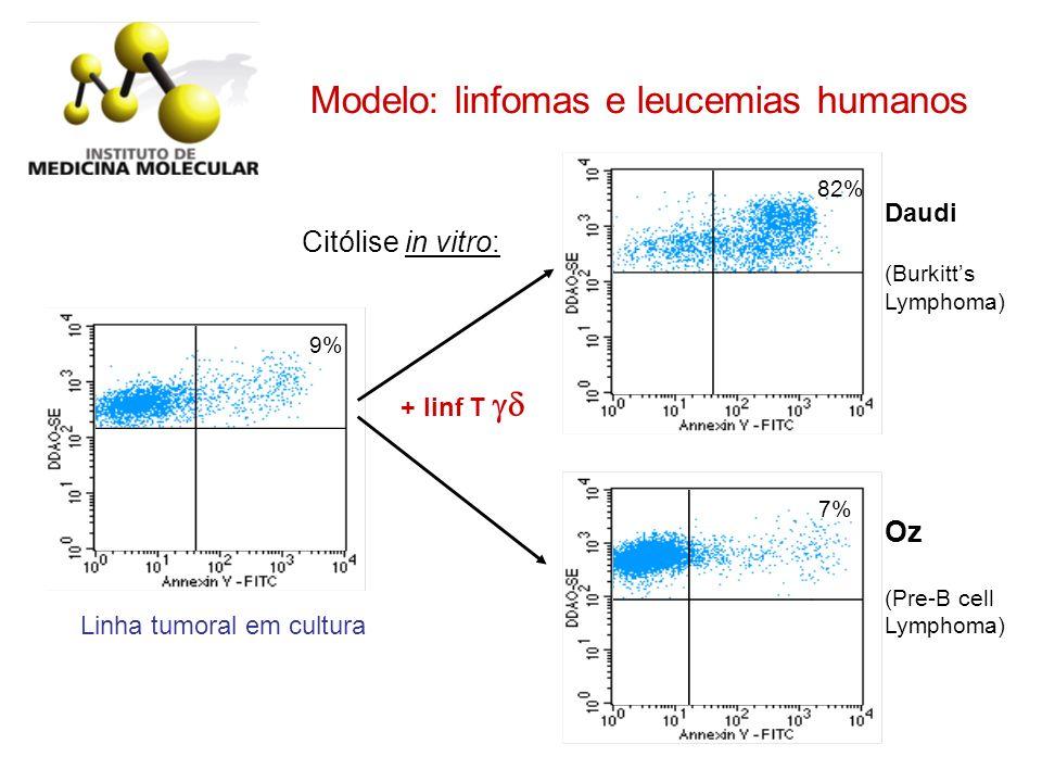 9% 82% + linf T Daudi (Burkitts Lymphoma) 7% Oz (Pre-B cell Lymphoma) Citólise in vitro: Modelo: linfomas e leucemias humanos Linha tumoral em cultura