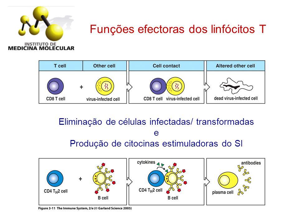 Figure 3-11 Funções efectoras dos linfócitos T Eliminação de células infectadas/ transformadas e Produção de citocinas estimuladoras do SI