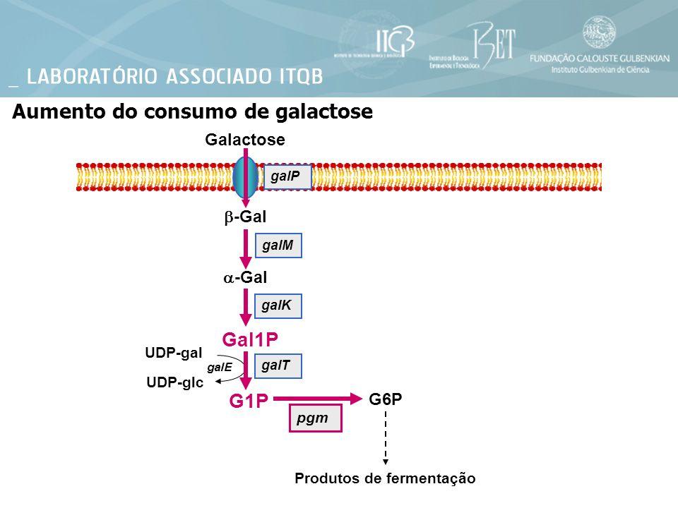 Galactose Aumento do consumo de galactose -Gal galT galP galM galK UDP-gal UDP-glc galE G6P Produtos de fermentação pgm Gal1P G1P