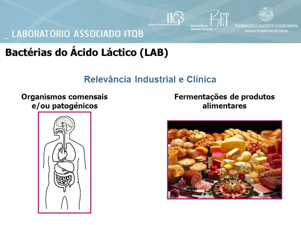 Organismos comensais e/ou patogénicos Fermentações de produtos alimentares Relevância Industrial e Clínica Bactérias do Ácido Láctico (LAB)