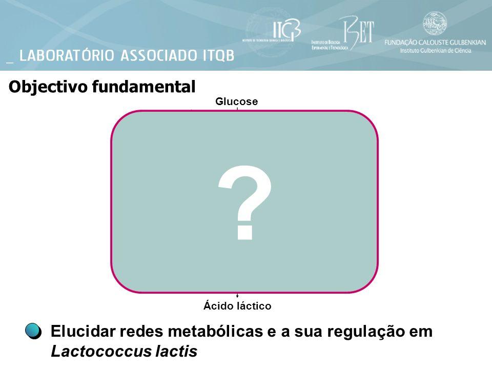 ? Objectivo fundamental Elucidar redes metabólicas e a sua regulação em Lactococcus lactis Glucose Ácido láctico