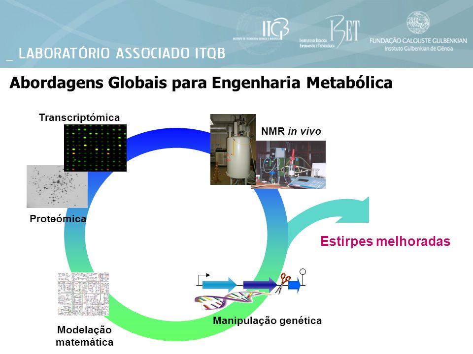 Modelação matemática Proteómica NMR in vivo Transcriptómica Manipulação genética Estirpes melhoradas Abordagens Globais para Engenharia Metabólica