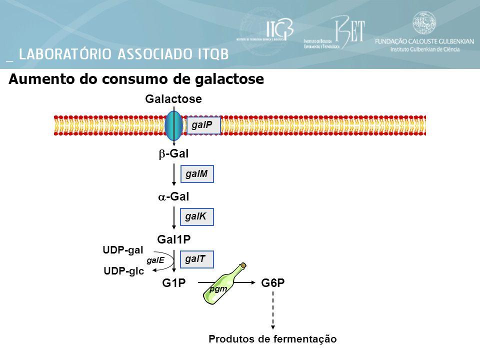 Galactose Aumento do consumo de galactose -Gal Gal1P G1P galT galP galM galK UDP-gal UDP-glc galE G6P pgm Produtos de fermentação