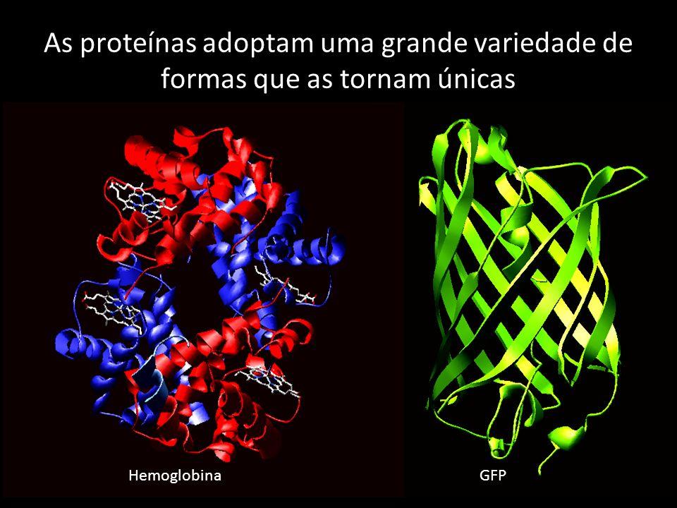 HemoglobinaGFP As proteínas adoptam uma grande variedade de formas que as tornam únicas