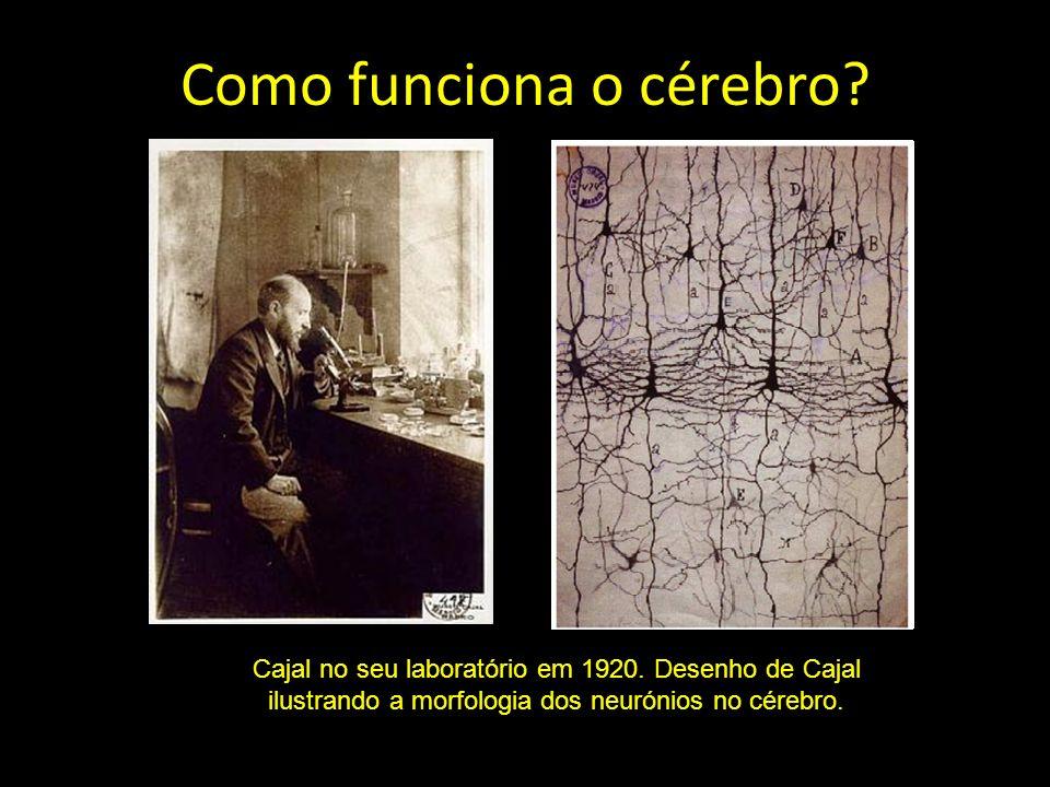 Como funciona o cérebro? Cajal no seu laboratório em 1920. Desenho de Cajal ilustrando a morfologia dos neurónios no cérebro.