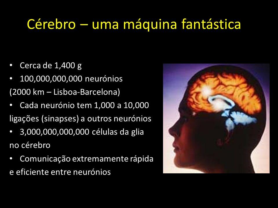 Cerca de 1,400 g 100,000,000,000 neurónios (2000 km – Lisboa-Barcelona) Cada neurónio tem 1,000 a 10,000 ligações (sinapses) a outros neurónios 3,000,