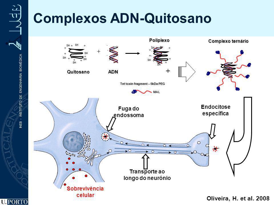 Tet toxin fragment – 5kDa PEG + Complexo ternário MAL - - - - - - ADN Poliplexo + - - - - - - SH Endocitose específica Transporte ao longo do neurónio
