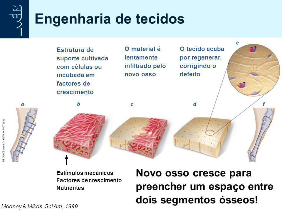 Engenharia de tecidos Estrutura de suporte cultivada com células ou incubada em factores de crescimento O material é lentamente infiltrado pelo novo o