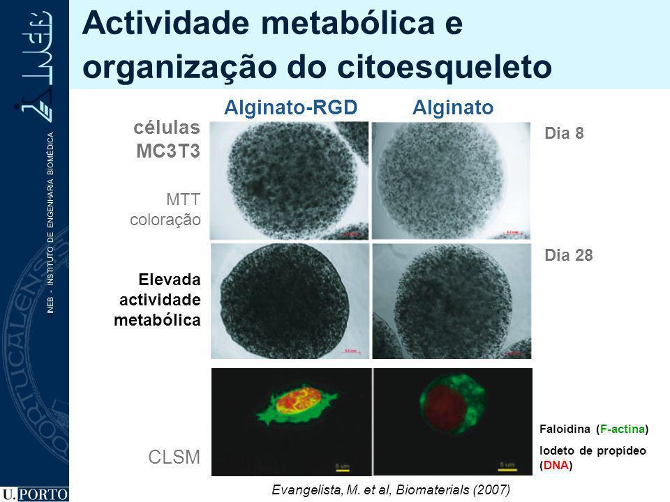Actividade metabólica e organização do citoesqueleto Dia 8 Dia 28 Alginato-RGDAlginato Evangelista, M. et al, Biomaterials (2007) Elevada actividade m