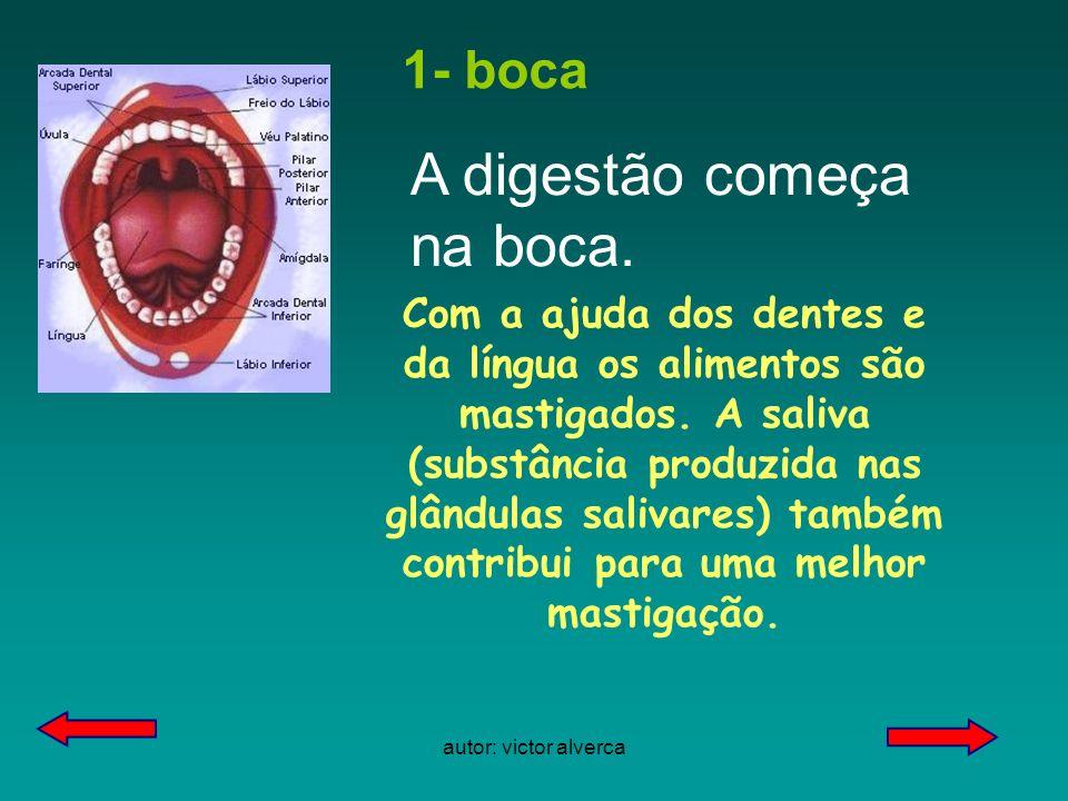 autor: victor alverca 1- boca Com a ajuda dos dentes e da língua os alimentos são mastigados.