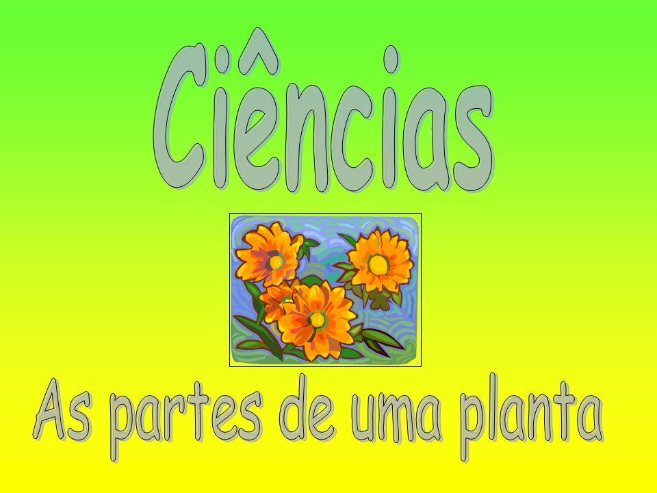 Vamos aprender as partes de uma planta.