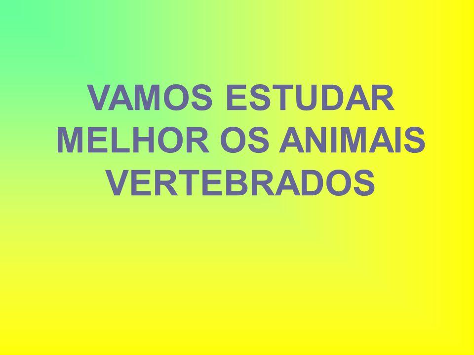 VAMOS ESTUDAR MELHOR OS ANIMAIS VERTEBRADOS