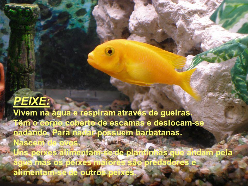 PEIXE: Vivem na água e respiram através de guelras. Têm o corpo coberto de escamas e deslocam-se nadando. Para nadar possuem barbatanas. Nascem de ovo