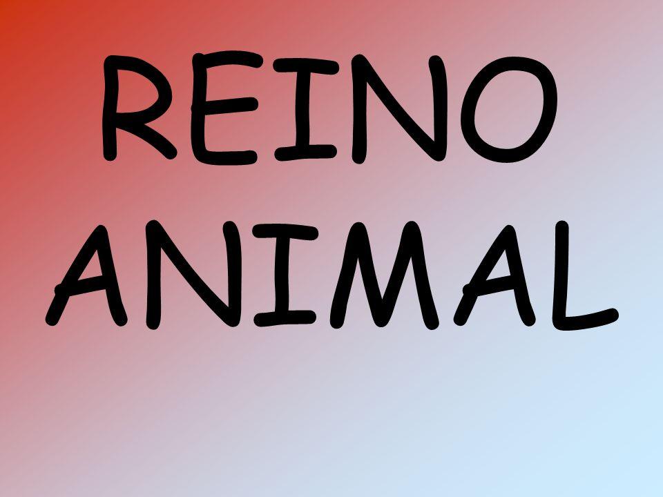 RÉPTIL: Têm o corpo coberto de escamas e alimentam-se de outros animais.