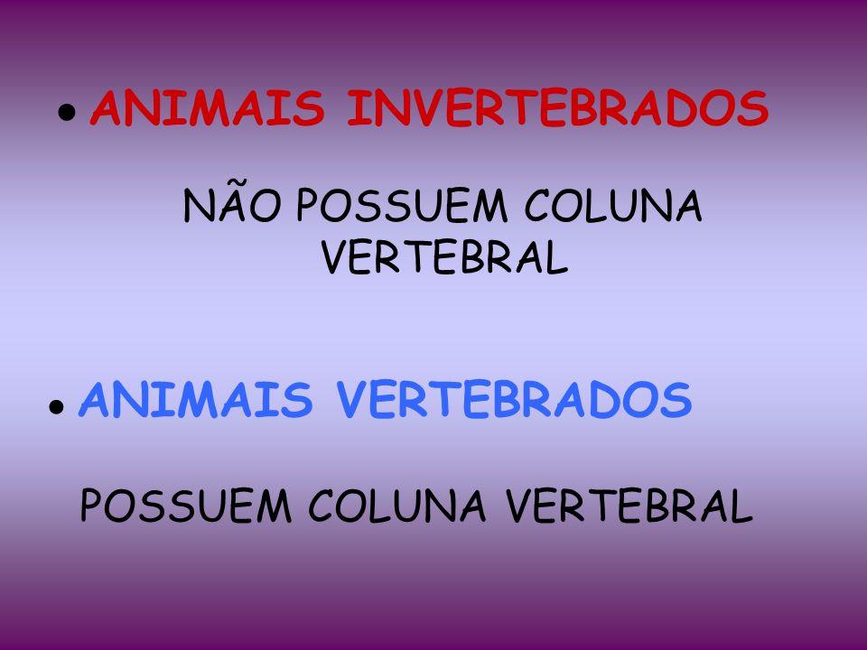 ANIMAIS INVERTEBRADOS ANIMAIS VERTEBRADOS NÃO POSSUEM COLUNA VERTEBRAL POSSUEM COLUNA VERTEBRAL