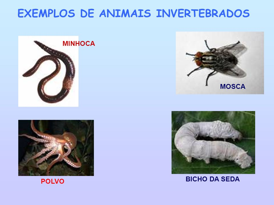 AVE: Nascem de ovos e alimentam-se essencialmente de pequenos insectos e vermes.