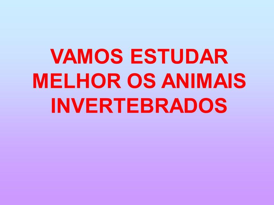 HÁ MUITOS TIPOS DE ANIMAIS INVERTEBRADOS.POR AGORA VAMOS ESTUDAR APENAS ESTES.