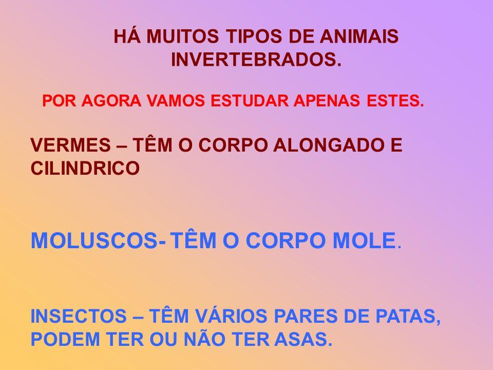 HÁ MUITOS TIPOS DE ANIMAIS INVERTEBRADOS. POR AGORA VAMOS ESTUDAR APENAS ESTES. VERMES – TÊM O CORPO ALONGADO E CILINDRICO MOLUSCOS- TÊM O CORPO MOLE.