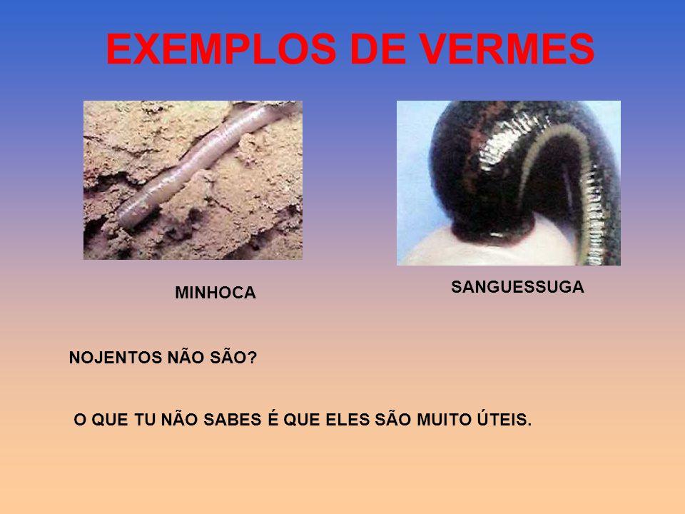 EXEMPLOS DE MOLUSCOS CARACOL LULA POLVO LESMA